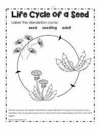 Life Cycle Of A Pumpkin Seed Worksheet by Parts Of A Plant Worksheets