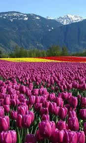 480x800 Beautiful Flower Field Mobile Wallpapers
