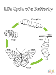 Butterfly Life Cycle Coloring Page Of A Free Printable Sheets