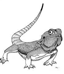 Bearded Dragon Colouring Pages