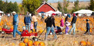 The Great Pumpkin Patch Pueblo Colorado by Denver Pumpkin Patches Festivals U0026 Mazes Mile High Mamas