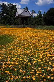 Pumpkin Patch Near Pensacola Florida by 32 Best Wildflowers Images On Pinterest Wildflowers Sunshine