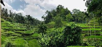 100 Bali Garden Ideas Trip Planner Vacation Itinerary Travel Guide