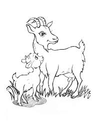 Coloring Pages Animals Goat 10