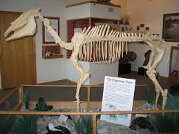 hagerman fossil beds national monument paleontological area
