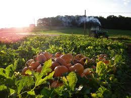Best Pumpkin Farms In Maryland by Deep Run Farms Featured In Usda Blog Pumpkin Patch Maryland