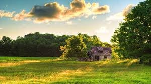 100 House In Nature Abandoned Picture Nr 61303