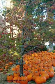 Faulkner County Pumpkin Patch by These 13 Charming Pumpkin Patches In Mississippi Are Picture