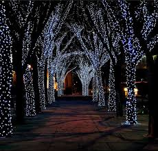 We Use Soft Flexible Rubber Lights That Are More UV Resistant And Dont Damage The Trees Bark