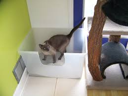 best cat litter boxes the best litter box dr globerman paws whiskers