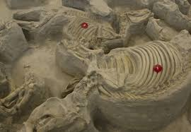 Ashfall Fossil Beds State Historical Park by Ashfall Fossil Beds Take A Step Into The Past Recreation