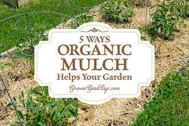 5 Ways Organic Mulch Helps Your Ve able Garden