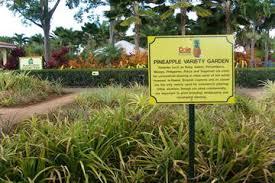 The 10 Best Dole Plantation Tours & Tickets Oahu
