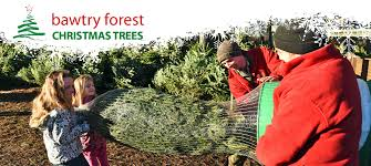 10ft Christmas Tree Uk by Christmas Trees At Bawtry Forest Doncaster Yorkshire And Botany