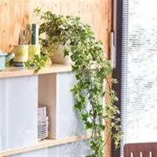 hängende zimmerpflanzen grün erleben baumer