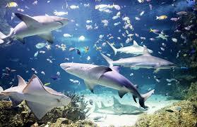 sea california aquarium merlin annual pass usa
