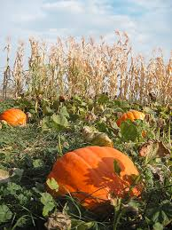 Greenbluff Pumpkin Patch Spokane Wa Hours by October Is Here And With It Haunted Houses And Corn Mazes Galore