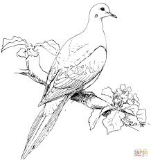 Mourning Dove Printable Coloring Page