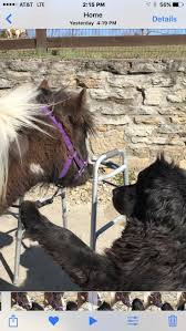 65 Best #ittybittyhorses Images On Pinterest | Therapy, Miniature ... Meadows Equestrian Center On Equinenow 96 Best Vet Books Images Pinterest Horses The Horse And A5f1895b8566a63e9b0f3f2269a3cfaae57a8ajpg Dressage In Faraway Places Today Full Clinic Anchorage Ak Chester Valley Veterinary Hospital Blog Archives Mountain Homes 4 Horse Country 2 2014 Digital By Linda Hazelwood Issuu Nottingham Equine Colic Project 25 Cozy Bed Barns Horserider Western Traing Howto Advice Best Ranch Vacations Of The West American Cowboy