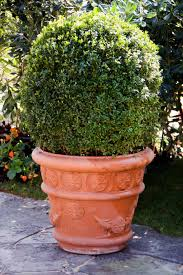 Best Plant For Bathroom Australia by The Best Tall Plants To Grow In Containers