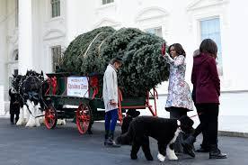 Christmas Tree Type Crossword by Obamas Receive White House Christmas Tree Washington Times