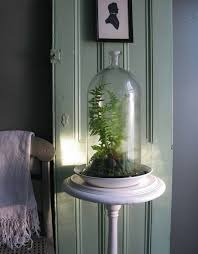 Best Plants For Bathroom No Light by 18 Best Houseplants Images On Pinterest Apartment Therapy