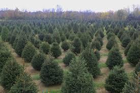 Ergle Christmas Tree Farm by Bride And Groom Christmas Ideas