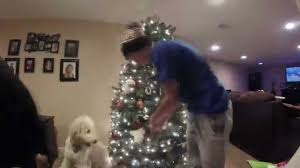 Christmas Tree Has Aphids by Time Lapse Of Setting Up Christmas Tree Youtube