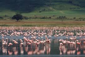 100 Crater Lodge Ngorongoro Ngorongoro Tanzania AndBeyond