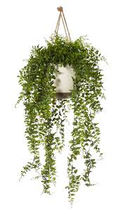 Plants For Bathroom Feng Shui by 100 Plants For Bathroom Feng Shui 2017 Feng Shui Tips And