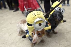 Tompkins Square Halloween Dog Parade by Beware The Pets When Handling The Halloween Candy Haul