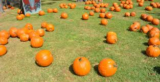 Best Pumpkin Patch Fort Worth Tx by 10 Family Friendly Farms To Visit In Texas U2014 The Titan Adventures