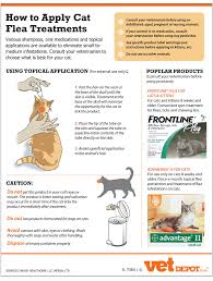 flea treatment for cats how to apply cat flea treatments infographic vetdepot