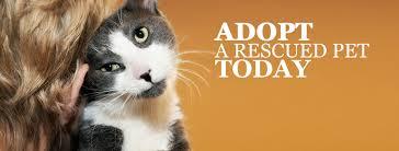 adopt a cat adoption center central kansas veterinary center
