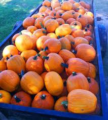 Pumpkin Patch Near Pensacola Fl by 2012 October Northescambia Com