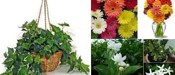 dormir avec une plante dans la chambre voici 8 plantes pour votre chambre qui vous aideront à mieux dormir