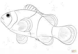 Click The Clown Fish Coloring Pages