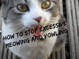 cat stop how to stop your cat from meowing and yowling