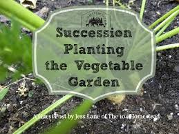 succession planting a garden plan from the 104 homestead