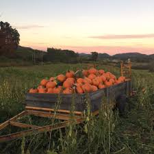 Heather Farms Pumpkin Patch by Myers Farm Home Facebook