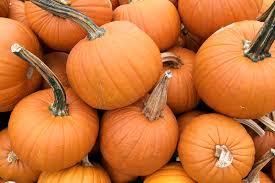 Varieties Of Pie Pumpkins by Pumpkins Produce Geek