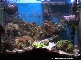 aquarium nano eau de mer nano aquarium récifal de 100 litres en méthode dsb