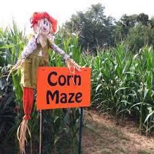 Pumpkin Patch Cincinnati by 52 Best Corn Maze Maze Images On Pinterest Corn Maze Pumpkin