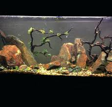 Aquascape Rocks John Masterpiece Titled Guidance On The Day Of ... King5com Fding Zen Through Aquascapes The Worlds Newest Photos By Pacific Aquascape Flickr Hive Mind Pacific Aquascape 28 Images Westin Photo Courtesy Of Christian Another Beautiful Pool Aquascapes For Luxury Living In Swimming Pool Contractors In Oahu Hi Aquascapes Ada Aquascaping Contest Homedesignpicturewin Submerged Jungle Fekete Tamas Awards Jungle 241 Best Aquatic Garden On Pinterest Aquascaping 111 Amazing Aquariums And The666 Extreme18
