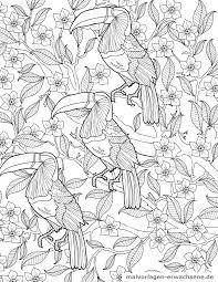 Livre De Coloriage Animaux De La Jungle 1 2 French Edition French Paperback Large Print July 16 2018 Coloriage Toucan