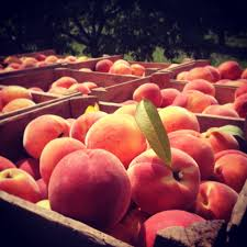 Pumpkin Farms In Harford County Maryland by Wilson U0027s Farm Market Localharvest
