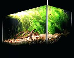 Aquascape Design Software – Homedesignpicture.win September 2010 Aquascape Of The Month Sky Cliff Aquascaping How To Set Up A Planted Aquarium Design Desiging Tank Basic Forms Aqua Rebell Suitable Plants With Picture Home Mariapngt Nature With Hd Resolution 1300x851 Designs Unique Hardscape Ideas And Fnitures Tag Wallpapers Flowers Beautiful Garden Best 25 Aquascaping Ideas On Pinterest From Start To Finish By Greg Charlet