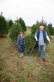 Griswold Christmas Tree Farm by Just Shy Of A Y A Visit To The Christmas Tree Farm