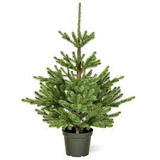 Rustic Artificial Christmas Tree Home Imperial Spruce Potted Feel Real Realistic Cool Trees House