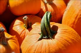 Pumpkin Patch Farms Nashville Tn by Fall Festival Falcon Ridge Farm